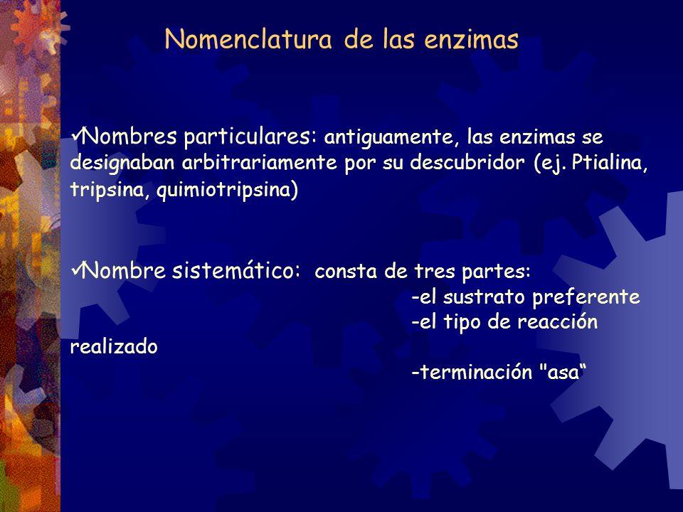 Nomenclatura de las enzimas Nombres particulares: antiguamente, las enzimas se designaban arbitrariamente por su descubridor (ej. Ptialina, tripsina,