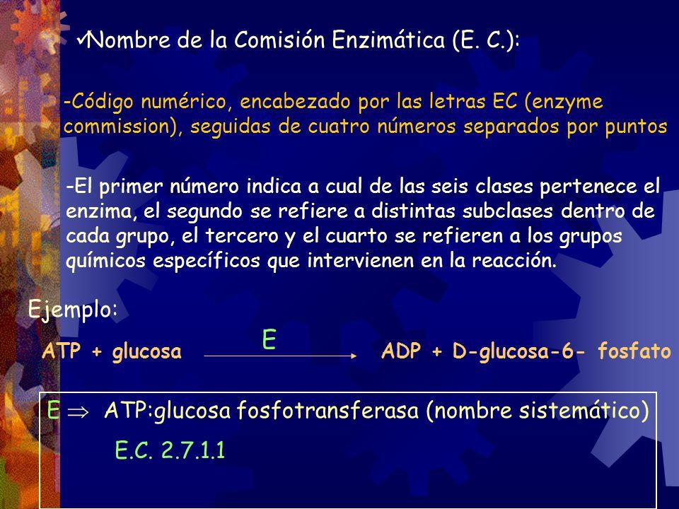 -Código numérico, encabezado por las letras EC (enzyme commission), seguidas de cuatro números separados por puntos -El primer número indica a cual de
