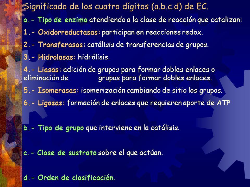 Significado de los cuatro dígitos (a.b.c.d) de EC. a.- Tipo de enzima atendiendo a la clase de reacción que catalizan: 1.- Oxidorreductasas: participa