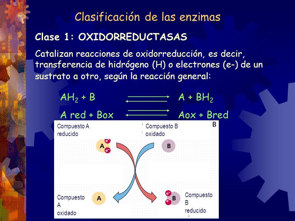 Clasificación de las enzimas Clase 1: OXIDORREDUCTASAS Catalizan reacciones de oxidorreducción, es decir, transferencia de hidrógeno (H) o electrones