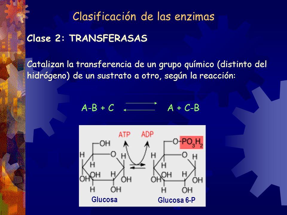 Clasificación de las enzimas Clase 2: TRANSFERASAS Catalizan la transferencia de un grupo químico (distinto del hidrógeno) de un sustrato a otro, segú