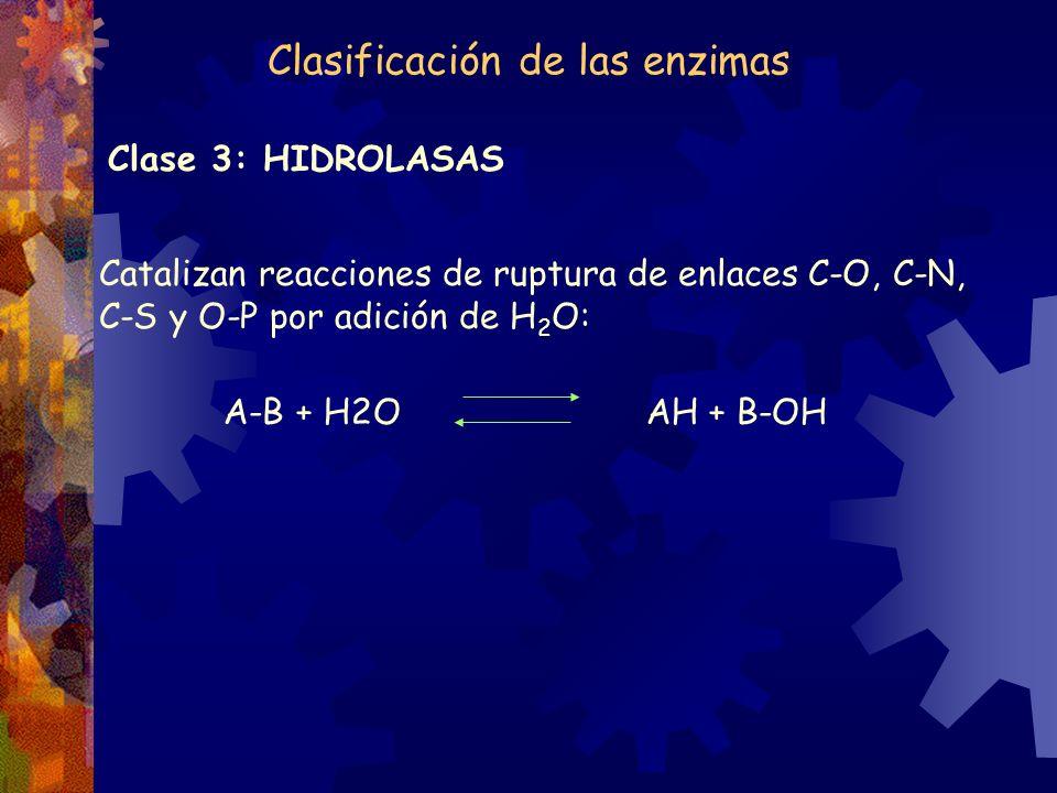 Clase 3: HIDROLASAS Catalizan reacciones de ruptura de enlaces C-O, C-N, C-S y O-P por adición de H 2 O: A-B + H2O AH + B-OH Clasificación de las enzi