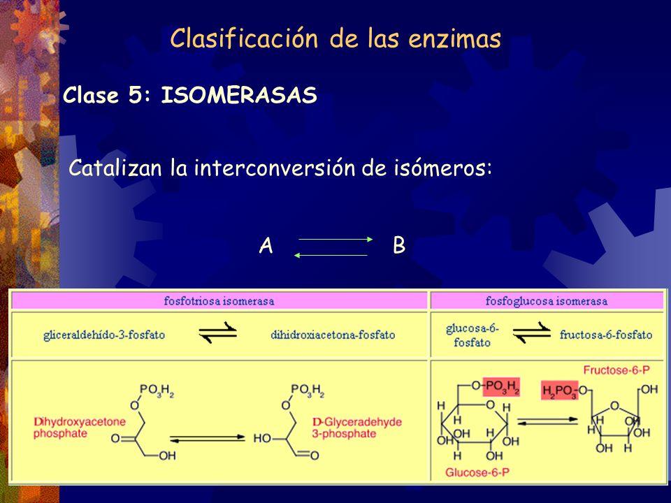Clase 5: ISOMERASAS Catalizan la interconversión de isómeros: A B Clasificación de las enzimas