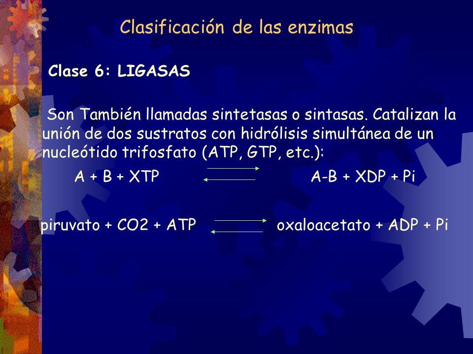 Clase 6: LIGASAS Son También llamadas sintetasas o sintasas. Catalizan la unión de dos sustratos con hidrólisis simultánea de un nucleótido trifosfato