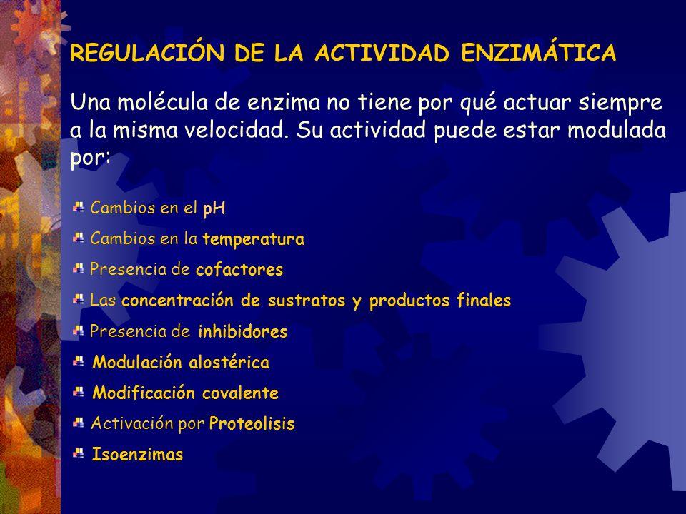 REGULACIÓN DE LA ACTIVIDAD ENZIMÁTICA Una molécula de enzima no tiene por qué actuar siempre a la misma velocidad. Su actividad puede estar modulada p