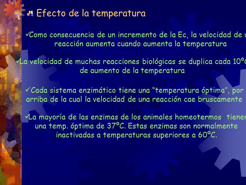 Como consecuencia de un incremento de la Ec, la velocidad de una reacción aumenta cuando aumenta la temperatura La velocidad de muchas reacciones biol