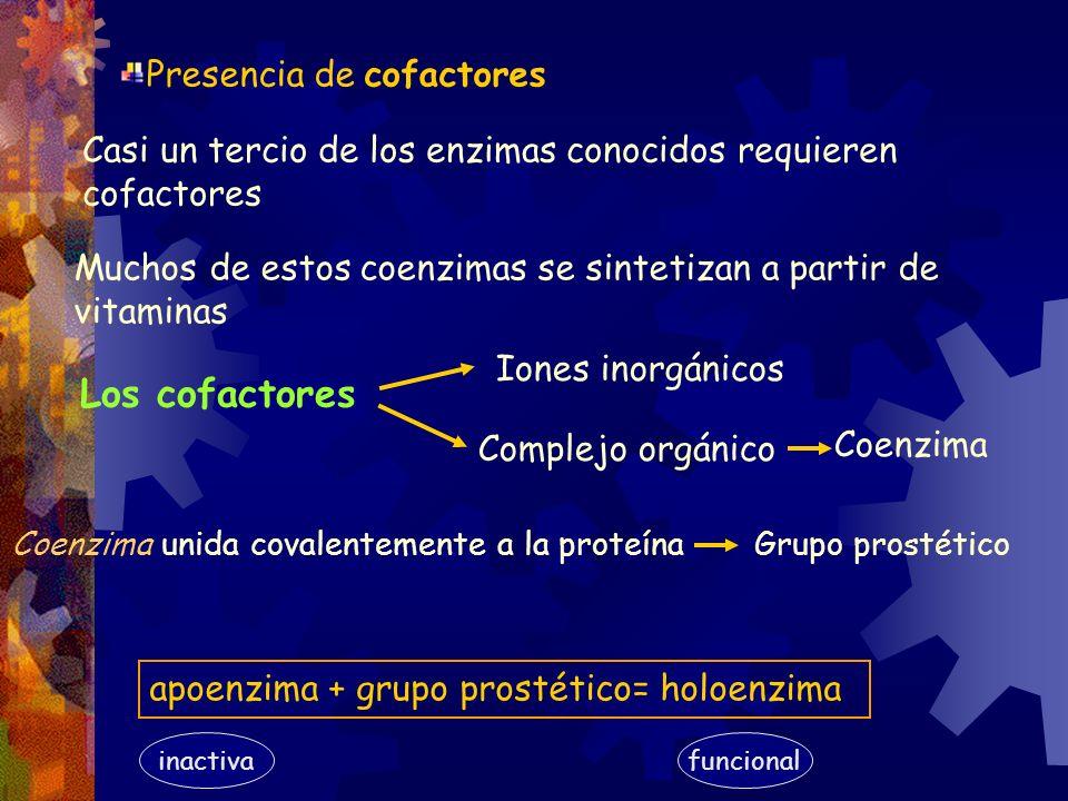 Presencia de cofactores Casi un tercio de los enzimas conocidos requieren cofactores Muchos de estos coenzimas se sintetizan a partir de vitaminas Coe