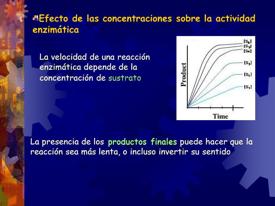 Efecto de las concentraciones sobre la actividad enzimática La velocidad de una reacción enzimática depende de la concentración de sustrato La presenc