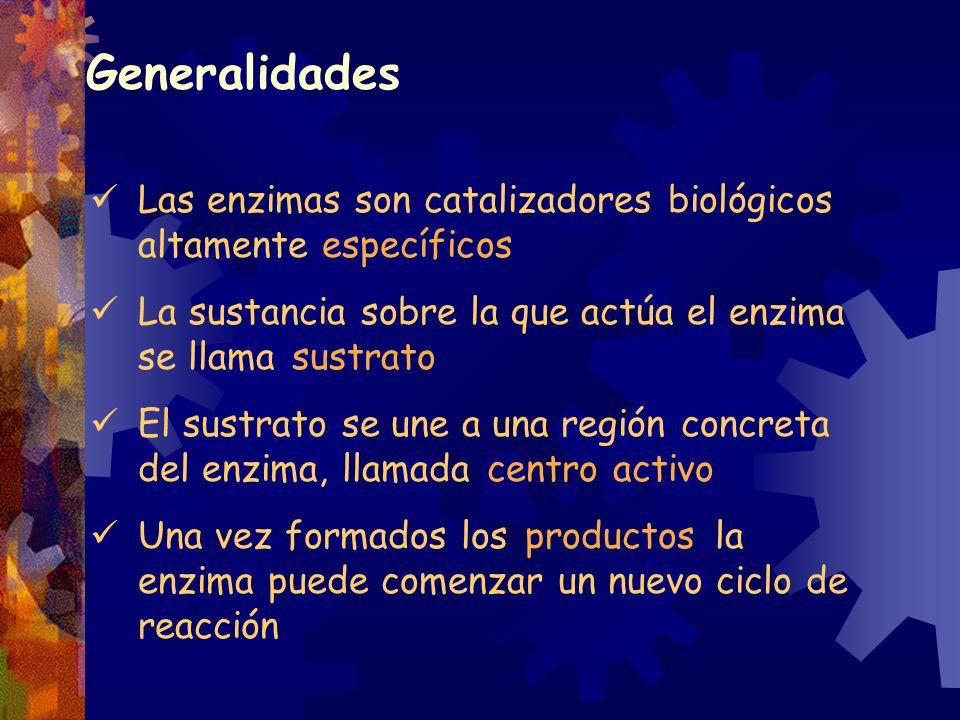 Las enzimas son catalizadores biológicos altamente específicos La sustancia sobre la que actúa el enzima se llama sustrato El sustrato se une a una re