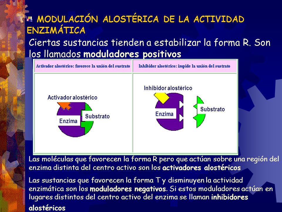 MODULACIÓN ALOSTÉRICA DE LA ACTIVIDAD ENZIMÁTICA Ciertas sustancias tienden a estabilizar la forma R. Son los llamados moduladores positivos Las moléc