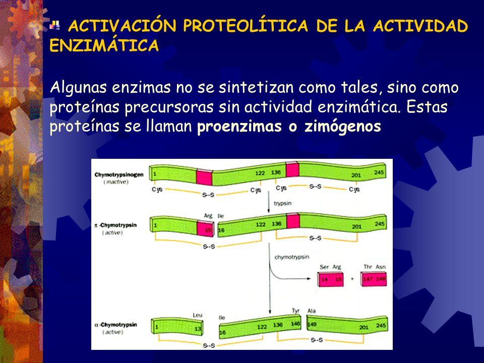 ACTIVACIÓN PROTEOLÍTICA DE LA ACTIVIDAD ENZIMÁTICA Algunas enzimas no se sintetizan como tales, sino como proteínas precursoras sin actividad enzimáti