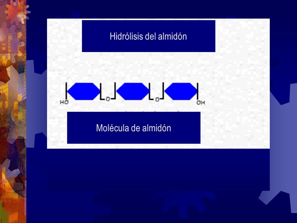 Hidrólisis del almidón Molécula de almidón