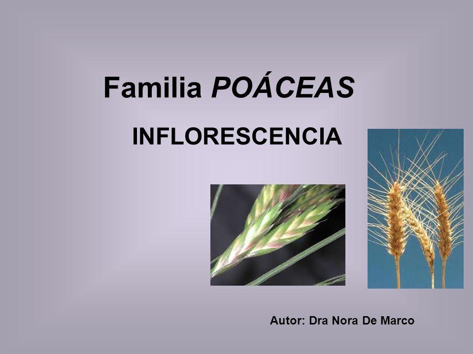 Familia POÁCEAS INFLORESCENCIA Autor: Dra Nora De Marco