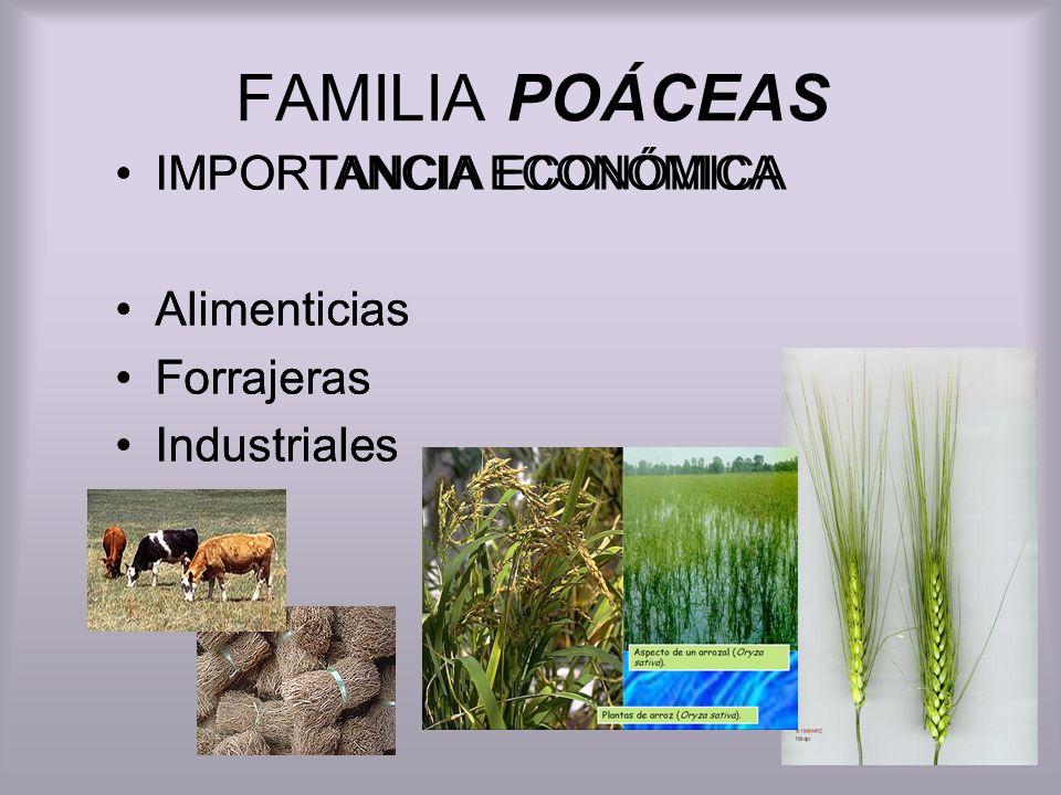FAMILIA POÁCEAS IMPORTANCIA ECONÓMICA Alimenticias Forrajeras Industriales IMPORTANCIA ECONÓMICA Alimenticias Forrajeras Industriales