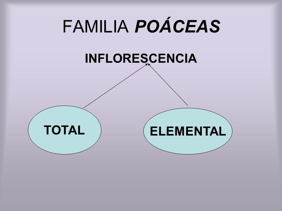 FAMILIA POÁCEAS INFLORESCENCIA TOTAL ELEMENTAL