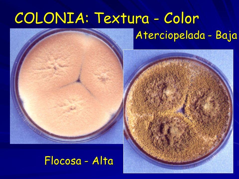 COLONIA: Textura - Color Aterciopelada - Baja Flocosa - Alta