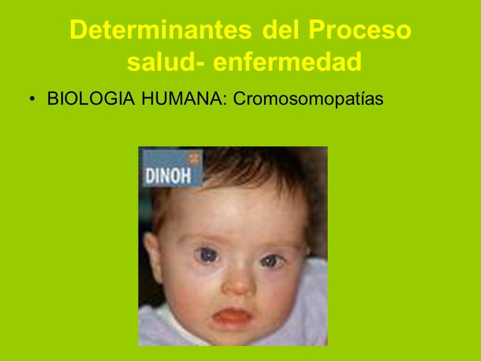 Determinantes del Proceso salud- enfermedad BIOLOGIA HUMANA: Cromosomopatías