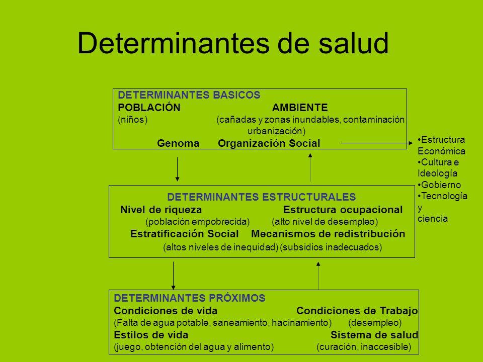 Determinantes de salud DETERMINANTES BASICOS POBLACIÓN AMBIENTE (niños) (cañadas y zonas inundables, contaminación urbanización) Genoma Organización S