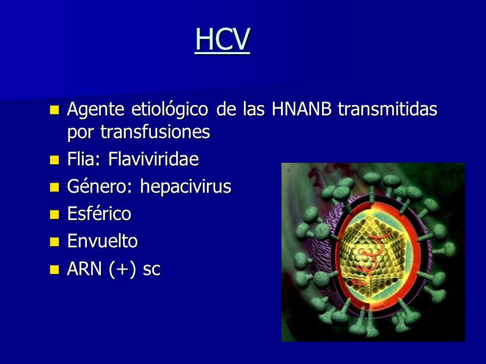 HCV Agente etiológico de las HNANB transmitidas por transfusiones Agente etiológico de las HNANB transmitidas por transfusiones Flia: Flaviviridae Fli