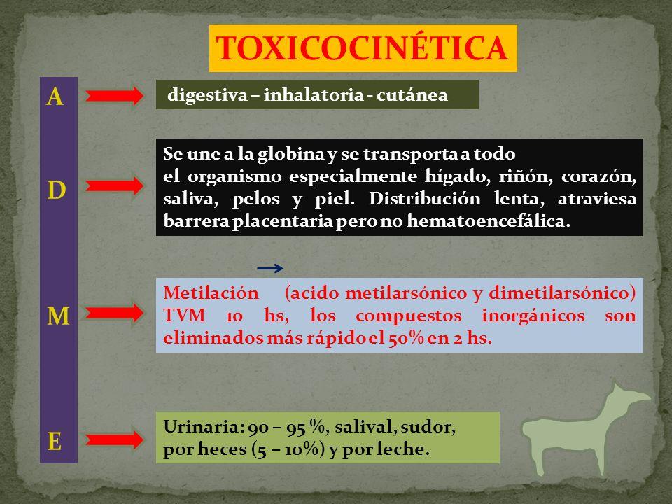 digestiva – inhalatoria - cutánea Se une a la globina y se transporta a todo el organismo especialmente hígado, riñón, corazón, saliva, pelos y piel.