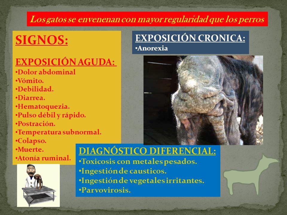 Los gatos se envenenan con mayor regularidad que los perros SIGNOS: EXPOSICIÓN AGUDA: Dolor abdominal Vómito. Debilidad. Diarrea. Hematoquezia. Pulso