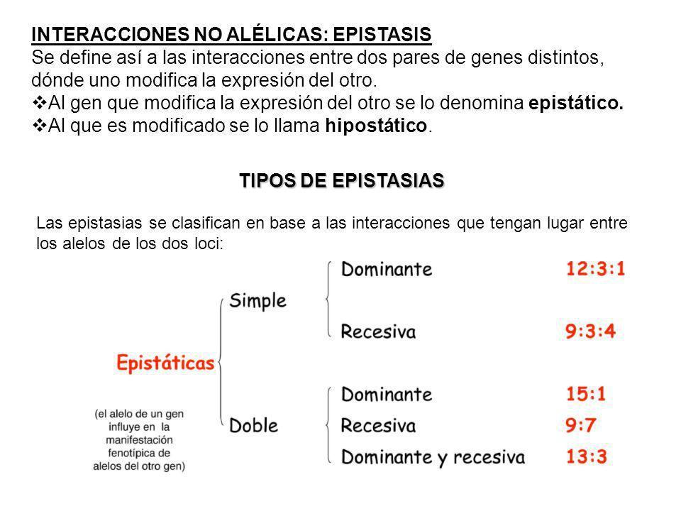 INTERACCIONES NO ALÉLICAS: EPISTASIS Se define así a las interacciones entre dos pares de genes distintos, dónde uno modifica la expresión del otro. A