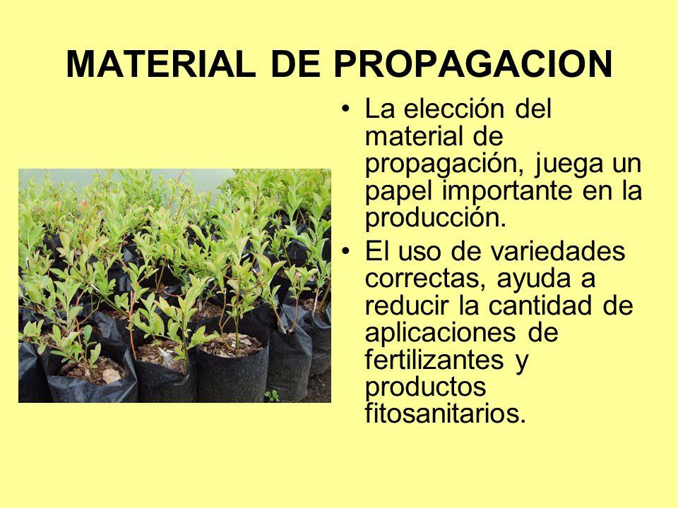 MATERIAL DE PROPAGACION La elección del material de propagación, juega un papel importante en la producción.