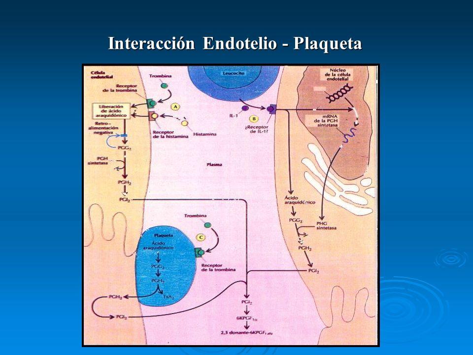 Interacción Endotelio - Plaqueta