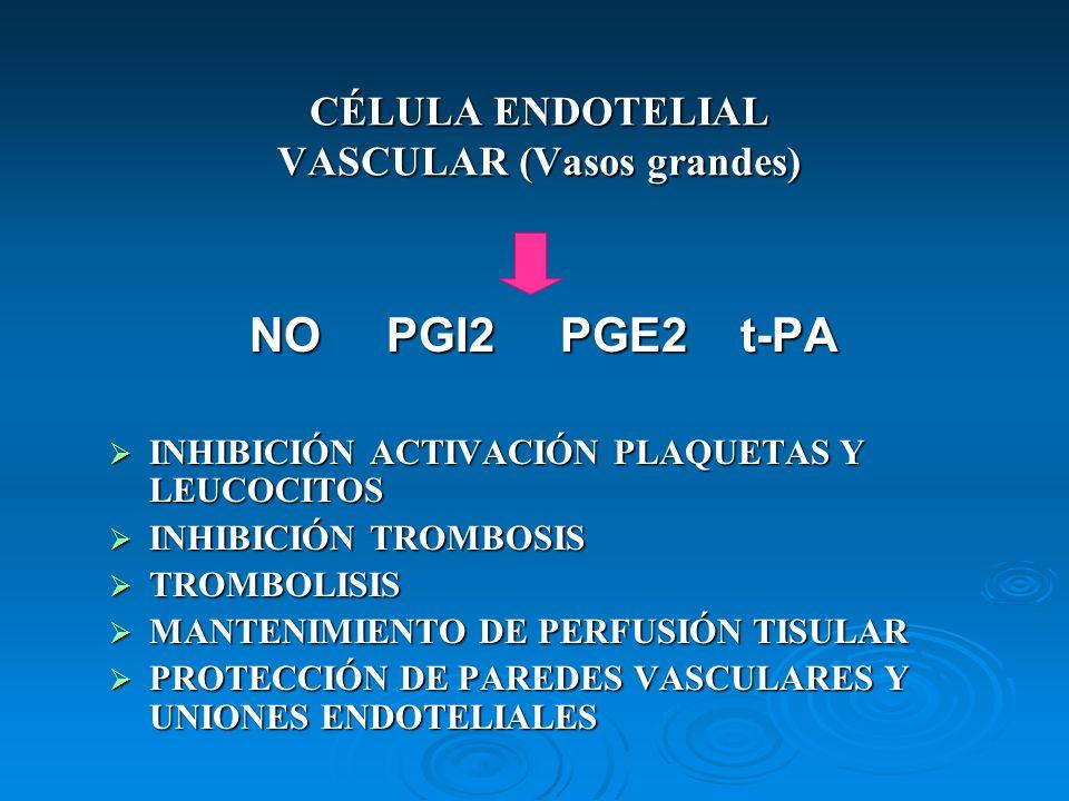 CÉLULA ENDOTELIAL VASCULAR (Vasos grandes) NO PGI2 PGE2 t-PA INHIBICIÓN ACTIVACIÓN PLAQUETAS Y LEUCOCITOS INHIBICIÓN ACTIVACIÓN PLAQUETAS Y LEUCOCITOS