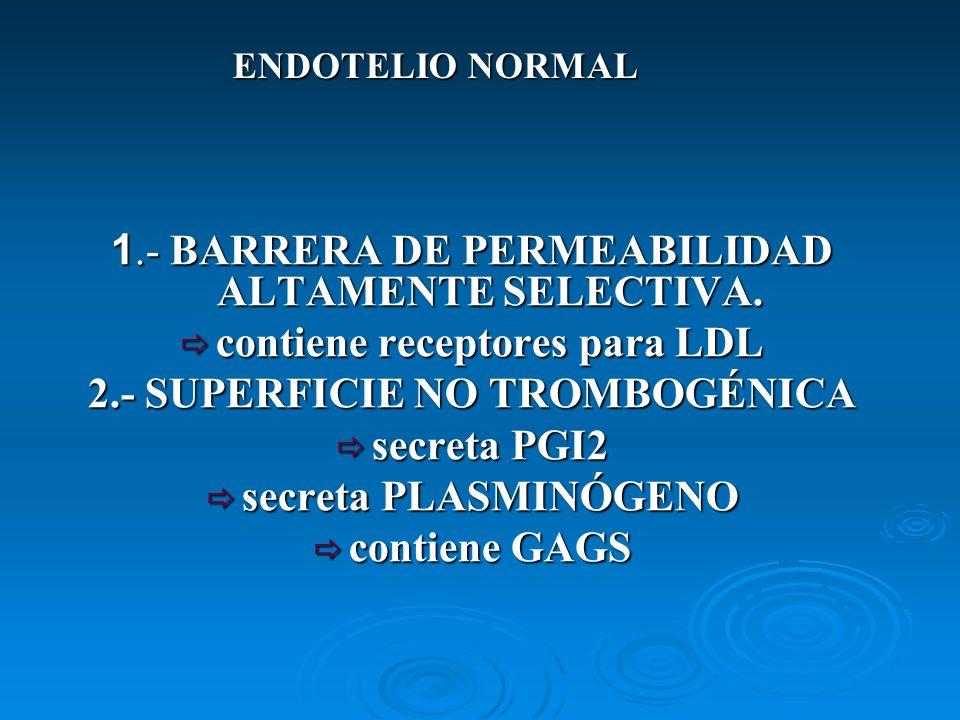 ENDOTELIO NORMAL 1.- BARRERA DE PERMEABILIDAD ALTAMENTE SELECTIVA. contiene receptores para LDL contiene receptores para LDL 2.- SUPERFICIE NO TROMBOG