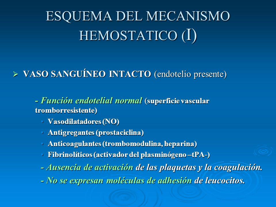 ESQUEMA DEL MECANISMO HEMOSTATICO ( I) VASO SANGUÍNEO INTACTO (endotelio presente) VASO SANGUÍNEO INTACTO (endotelio presente) - Función endotelial no