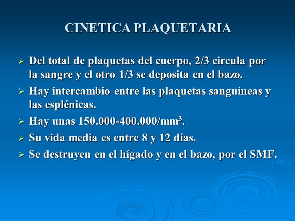 CINETICA PLAQUETARIA Del total de plaquetas del cuerpo, 2/3 circula por la sangre y el otro 1/3 se deposita en el bazo. Del total de plaquetas del cue
