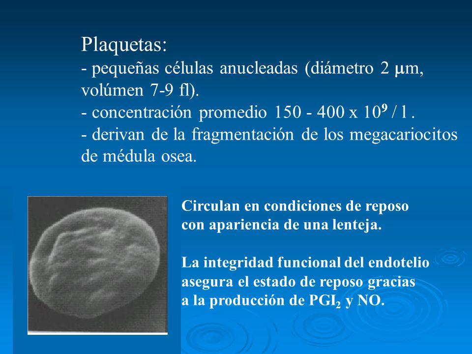 Plaquetas: - pequeñas células anucleadas (diámetro 2 m, volúmen 7-9 fl). - concentración promedio 150 - 400 x 10 9 / l. - derivan de la fragmentación