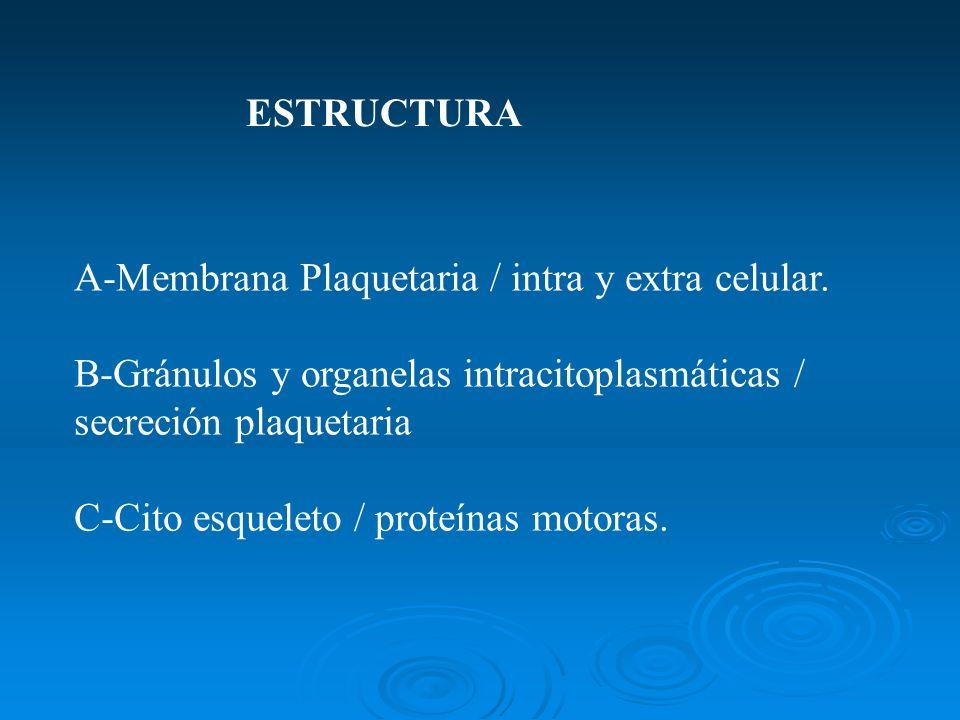A-Membrana Plaquetaria / intra y extra celular. B-Gránulos y organelas intracitoplasmáticas / secreción plaquetaria C-Cito esqueleto / proteínas motor