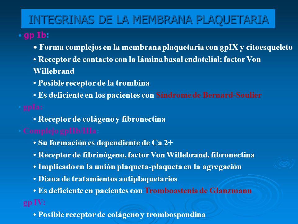 INTEGRINAS DE LA MEMBRANA PLAQUETARIA gp Ib: Forma complejos en la membrana plaquetaria con gpIX y citoesqueleto Receptor de contacto con la lámina ba