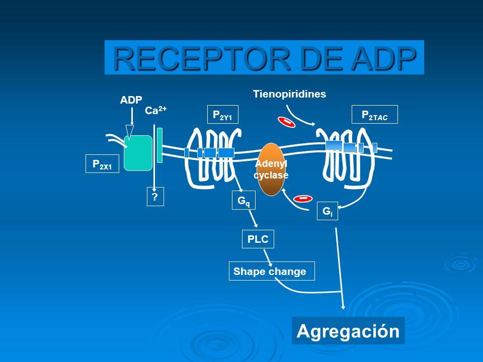 Adenyl cyclase Agregación Shape change PLC GqGq GiGi Ca 2+ ? P 2Y1 ADP Tienopiridines P 2TAC P 2X1 RECEPTOR DE ADP