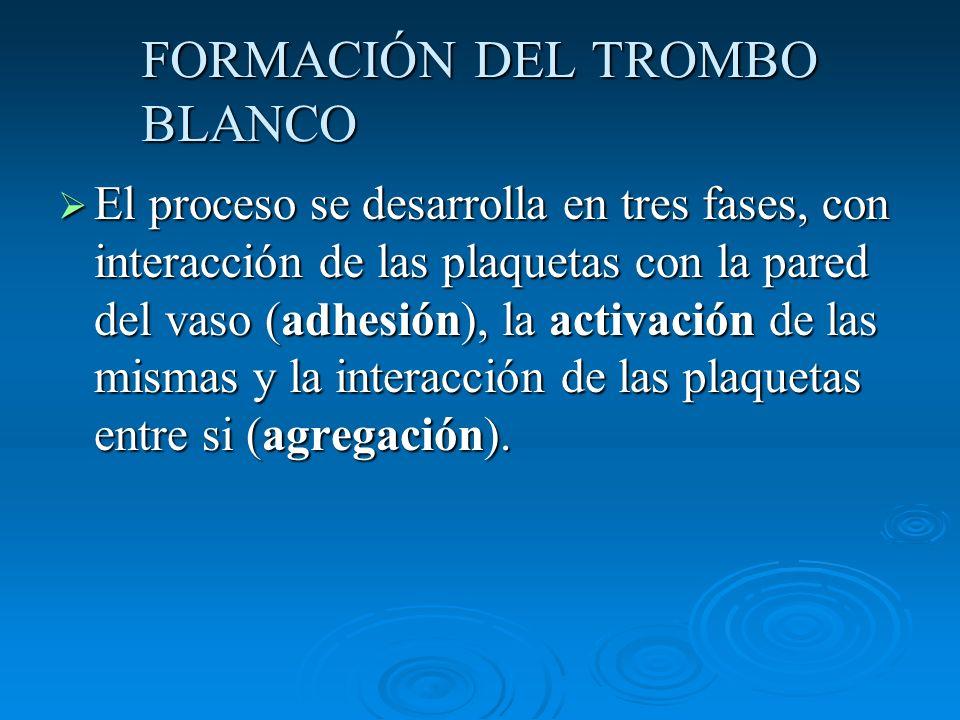 FORMACIÓN DEL TROMBO BLANCO El proceso se desarrolla en tres fases, con interacción de las plaquetas con la pared del vaso (adhesión), la activación d