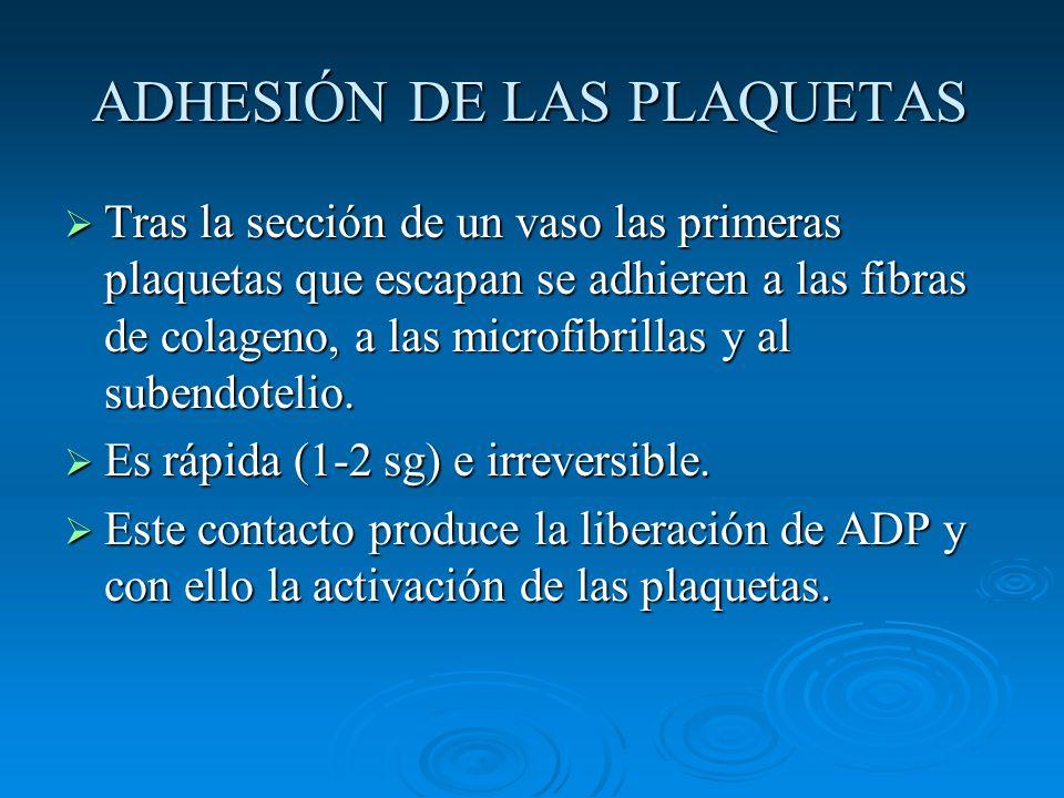 ADHESIÓN DE LAS PLAQUETAS Tras la sección de un vaso las primeras plaquetas que escapan se adhieren a las fibras de colageno, a las microfibrillas y a