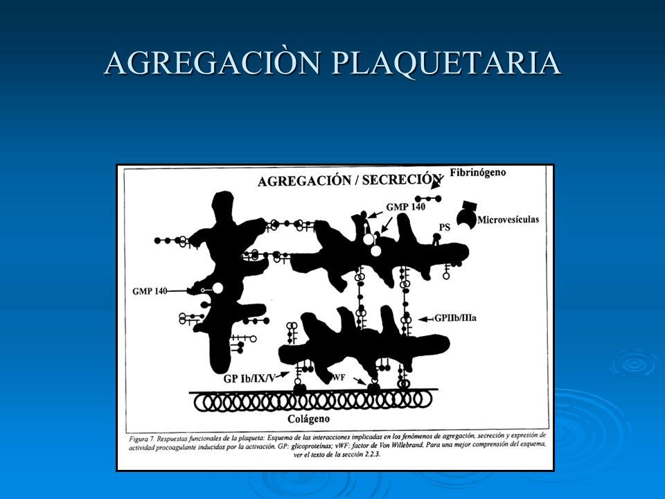 AGREGACIÒN PLAQUETARIA