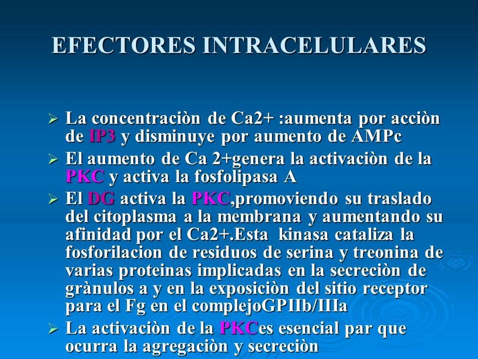 EFECTORES INTRACELULARES La concentraciòn de Ca2+ :aumenta por acciòn de IP3 y disminuye por aumento de AMPc La concentraciòn de Ca2+ :aumenta por acc