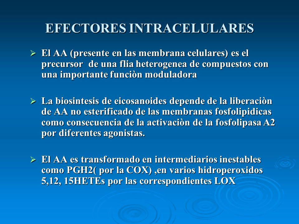 EFECTORES INTRACELULARES El AA (presente en las membrana celulares) es el precursor de una flia heterogenea de compuestos con una importante funciòn m