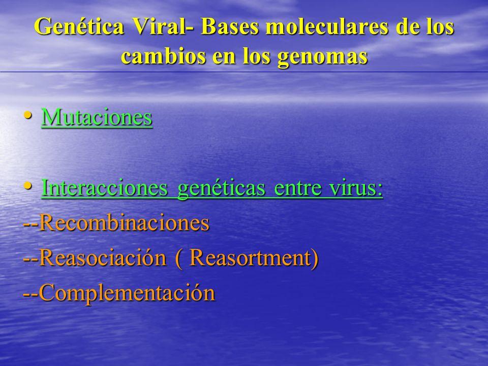 Genética Viral- Bases moleculares de los cambios en los genomas Mutaciones Mutaciones Interacciones genéticas entre virus: Interacciones genéticas entre virus:--Recombinaciones --Reasociación ( Reasortment) --Complementación