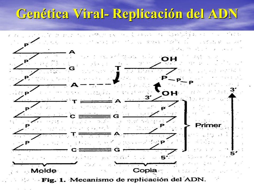 Genética Viral- Replicación del ADN