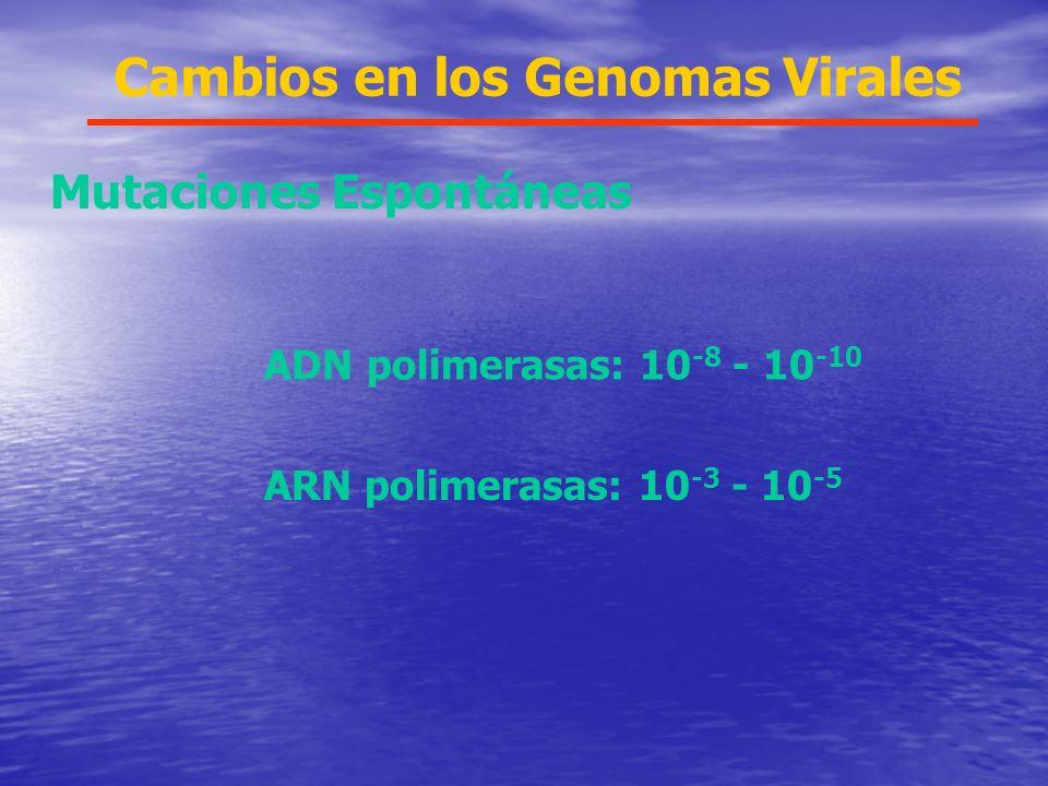 Cambios en los Genomas Virales Mutaciones Espontáneas ADN polimerasas: 10 -8 - 10 -10 ARN polimerasas: 10 -3 - 10 -5