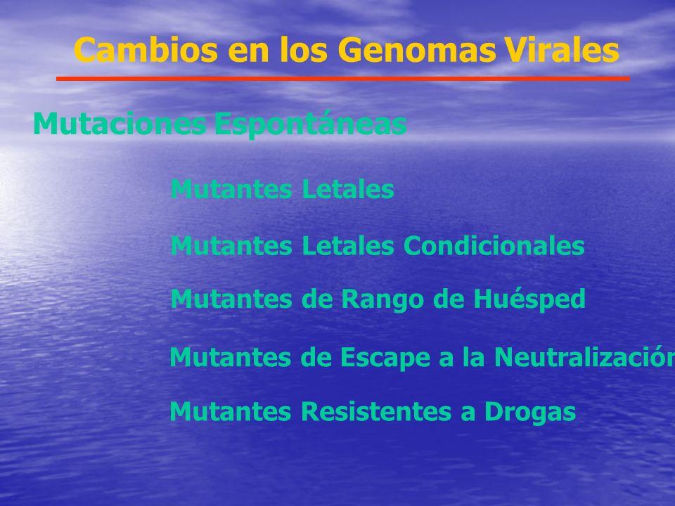 Cambios en los Genomas Virales Mutaciones Espontáneas Mutantes Letales Mutantes Letales Condicionales Mutantes de Rango de Huésped Mutantes Resistentes a Drogas Mutantes de Escape a la Neutralización