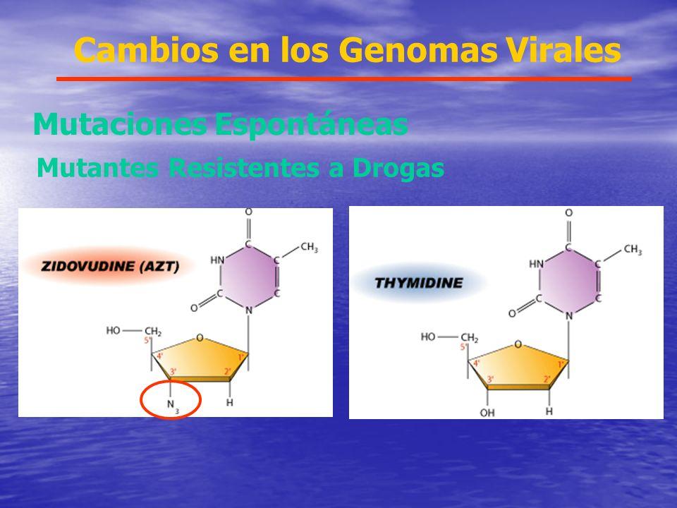 Azidodeoxitimidina Cambios en los Genomas Virales Mutaciones Espontáneas Mutantes Resistentes a Drogas