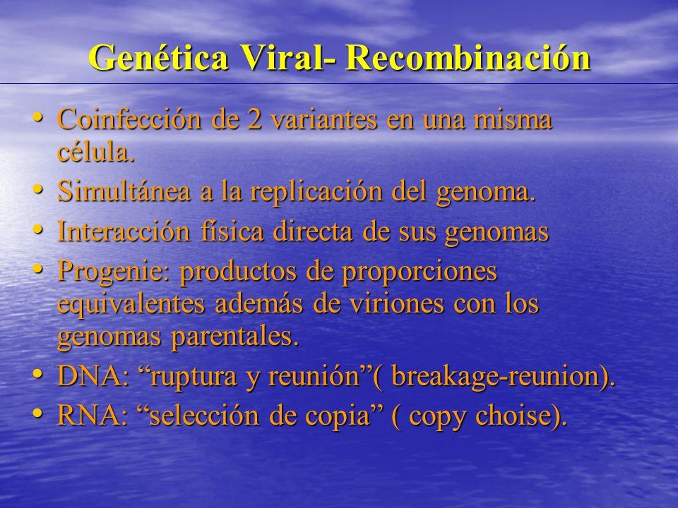 Genética Viral- Recombinación Coinfección de 2 variantes en una misma célula.