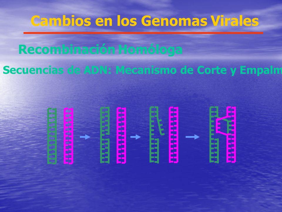 Cambios en los Genomas Virales Recombinación Homóloga Secuencias de ADN: Mecanismo de Corte y Empalme