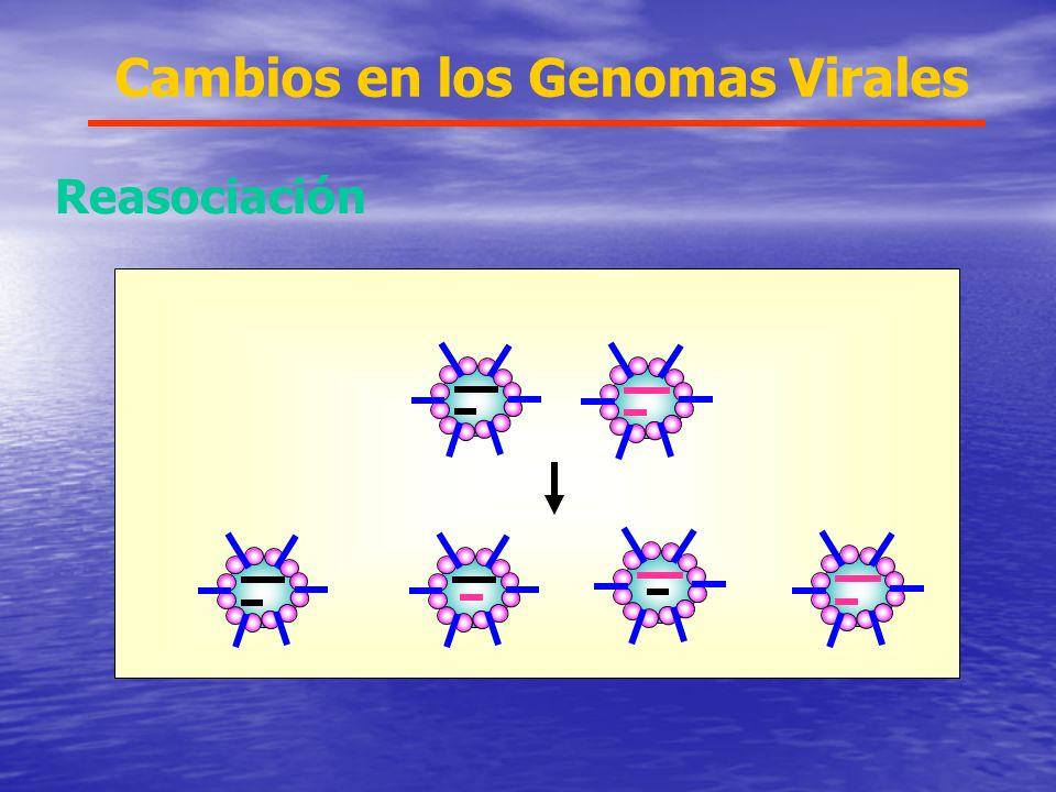 Cambios en los Genomas Virales Reasociación