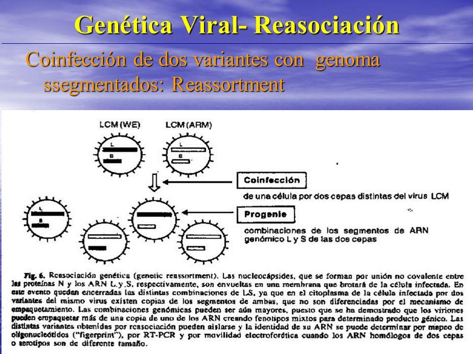 Genética Viral- Reasociación Coinfección de dos variantes con genoma ssegmentados: Reassortment